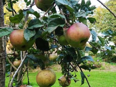 Traversée nature/plein air - Glanage de pommes