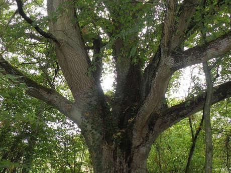 Atelier nature - Découverte de l'énergie des arbres et  comment communiquer avec la nature