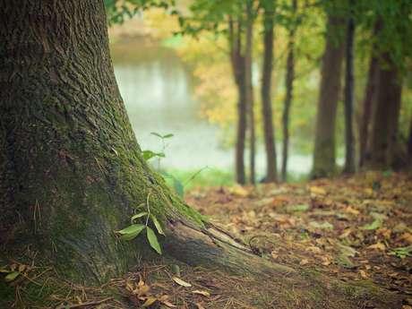 Bain de nature et éveil des sens