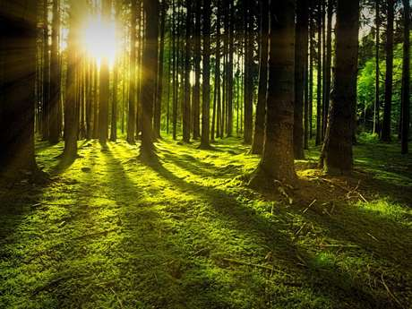 Atelier - Découverte de l'énergie des arbres