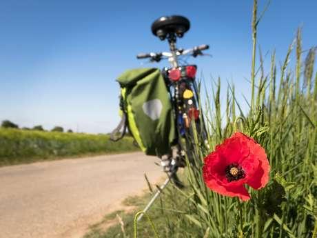 Circuit vélo guidé : des algues au cidre