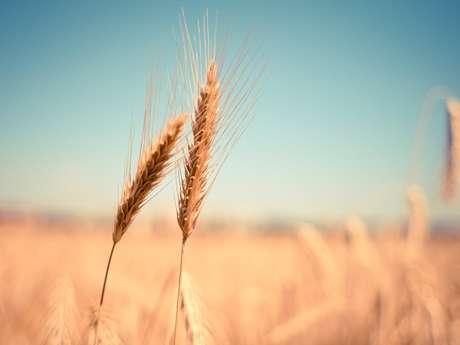 """Exposition : """"Du grain à la farine"""" - REPORTÉE"""