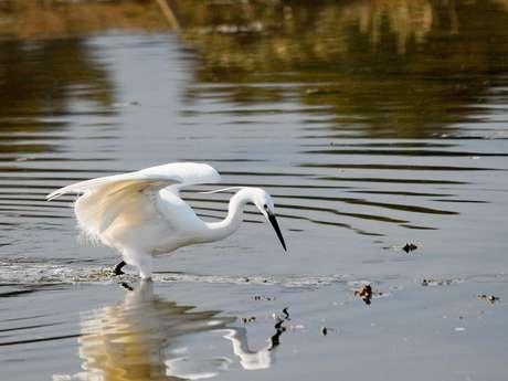 Animation observation des oiseaux de l'Estuaire
