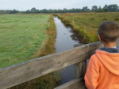 Les Balades Nature de Steven - Le polder de A à Z