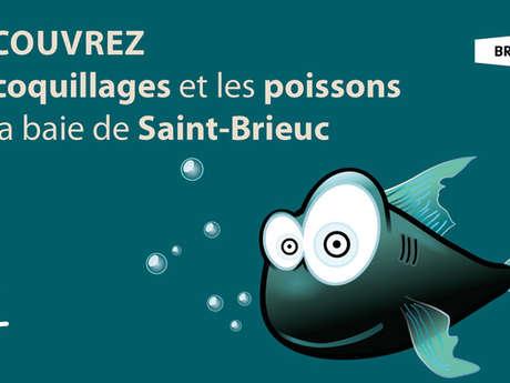 Découvrez les coquillages et les poissons de la baie de Saint-Brieuc