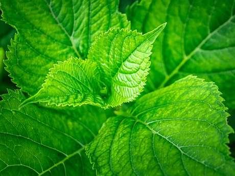 1, 2, 3 PLANTES SAUVAGES ! - BALADES ET ANIMATIONS