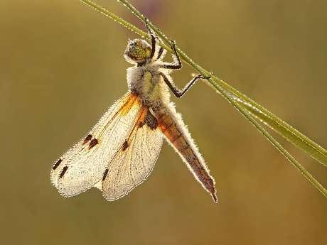 Sortie Nature - Sur la piste des libellules et papillons