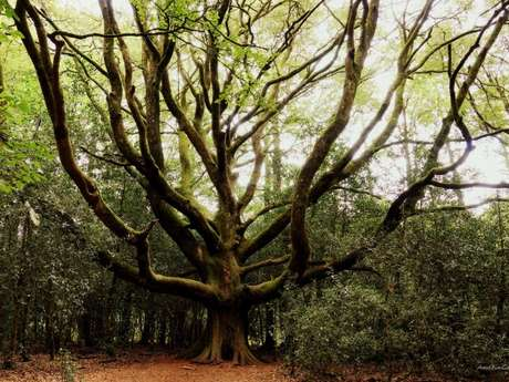 La forêt sous toutes les coutures