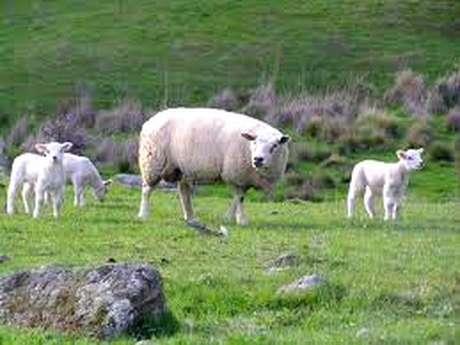 Biodiversité et Pastoralisme