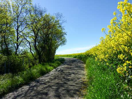 Sur la Route des Moulins