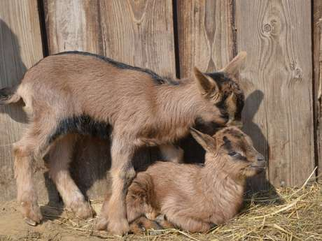 ANNULE - Foire aux Chèvres