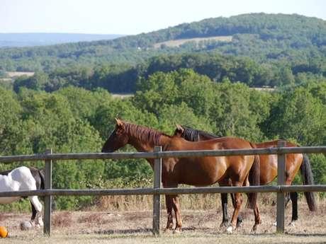 Centre Equestre de Grand Lac
