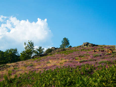CAUSSES AND CEVENNES : UNESCO WORLD HERITAGE