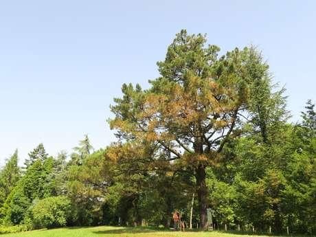 N° 82 Arboretum de Payssas