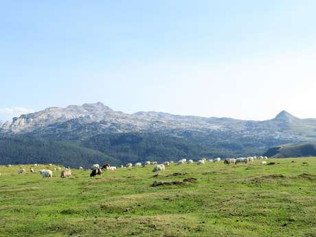 Monsieur Michel LARROUYET - Accompagnateur en montagne