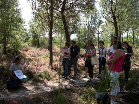 Visite guidée pédestre à la découverte de la Réserve Naturelle du Courant d'Huchet