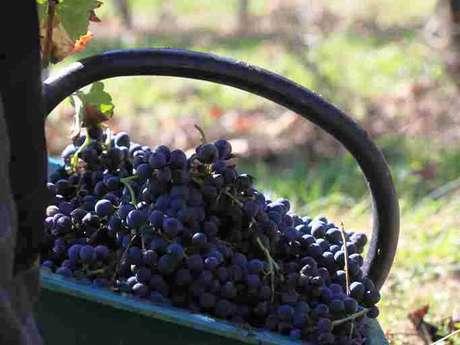 ANNULÉE : Visite de la Cave des Vignerons de Tursan