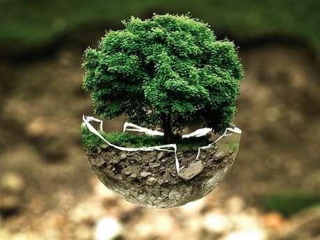 Sortie nature : Les Plantes des Trottoirs