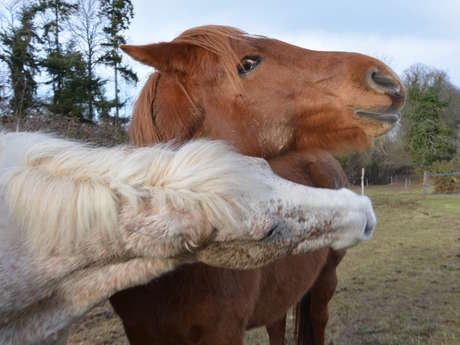 Loisirs Equitation