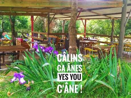 CALINS CA-ANES