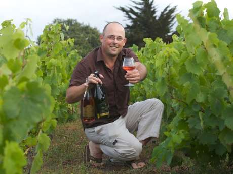 CAVE PAJOT LAURENT- WINEMAKER