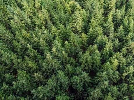 Office national des forêts (ONF)