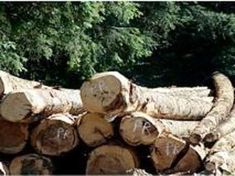 La chênaie de Seillon - Forêt domaniale