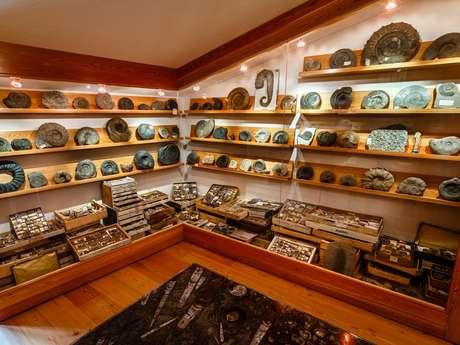 Exposition de fossiles