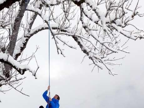 Séances hivernales de découverte de la grimpe d'arbre