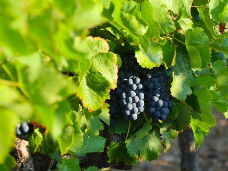 Beyond The Wine - Découverte des Vignobles de Gassin