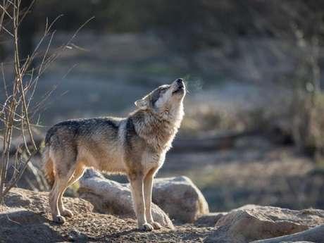 Randonnée Pédestre Journée Sur les traces du Loup en Belledonne