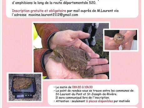 Venez participer à un suivi de populations d'amphibiens!