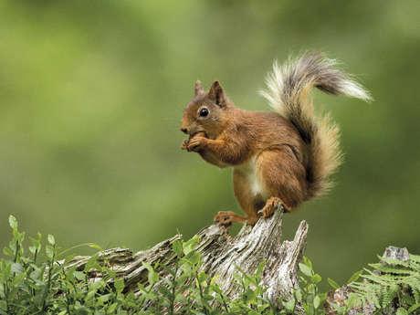 46 - Enduro - Red - l'écureuil