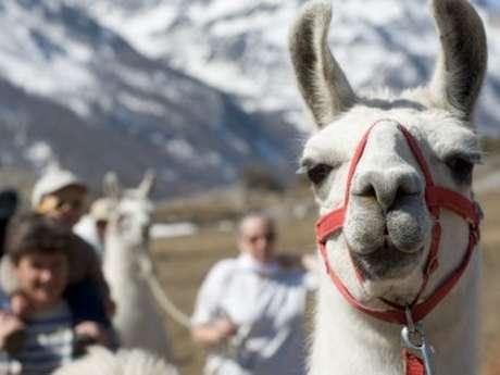 Randonnées avec des lamas & poneys - La Ferme de Claire