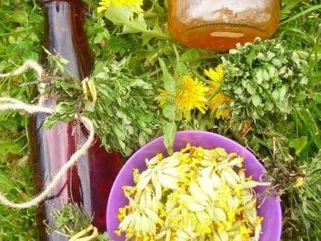 A la rencontre du monde végétal : plantes médicinales et comestibles