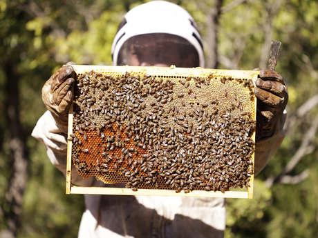 Festival Ventoux Saveurs : Journée des abeilles et du miel