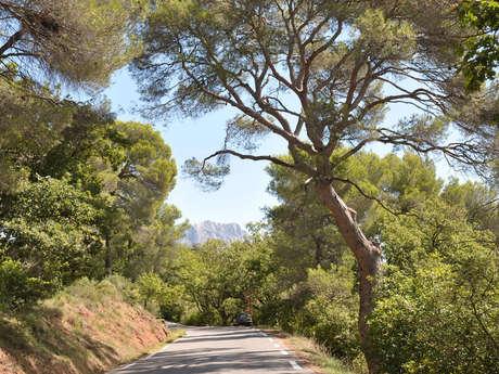 La Route Cezanne