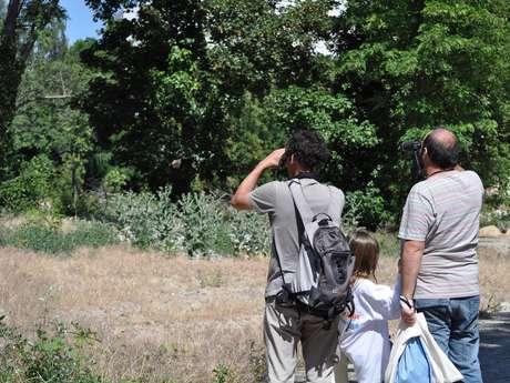 A la découverte des oiseaux du Grand Parc