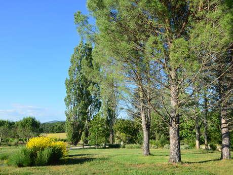 Domaine de la Bastidonne - Mas de L'Olivier