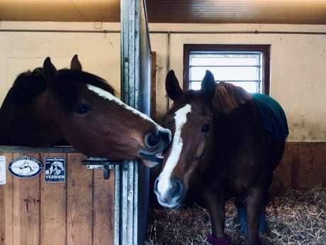 Entdecke die Welt der Pferde
