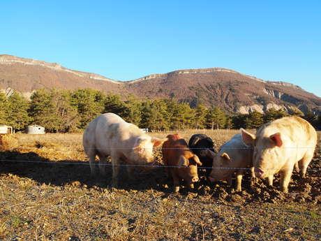 Farm of the Chevalet