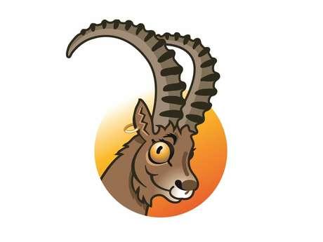 Célestin the Ibex