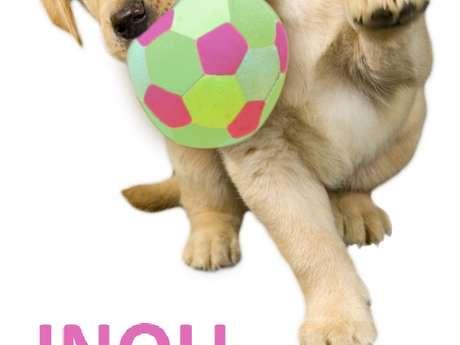 Cours d'éducation canine, médiation animale et hebergement
