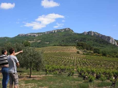 Balade culturelle au sein du vignoble et dégustation - Les Celliers Amadieu