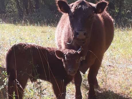 Ferme du Coq à l'Âne : élevage de chèvres et de vaches