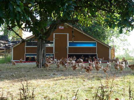 Free-range poultry sales at Renounière farm