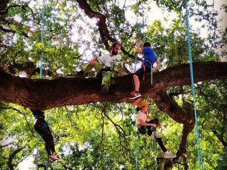Graines d'arbres : Grimpe d'arbre et autres activités encadrées