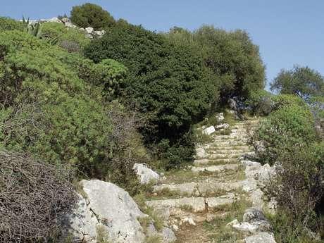 L'Oppidum du Mont des Mules