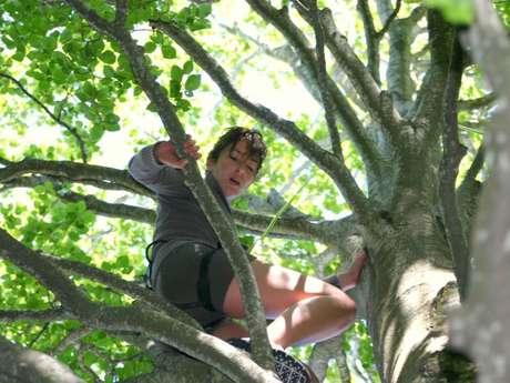 Améthyste - Grimpe d'arbres