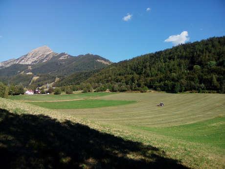 L'agriculture du Champsaur